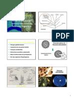 Sistematica de Hongos Fitopatogenos
