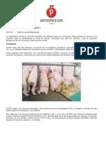 Articulo Colibacilosis Porcina Neonatal I