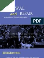 Tissue Renewal and Repair