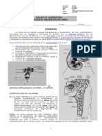 Guía Laboratorio Nº5 Análisis de Orina 2014