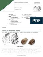 FAO Fisheries & Aquaculture - Programa de Información de Especies Acuáticas - Crassostrea Gigas (Thunberg, 1793)