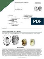 FAO Fisheries & Aquaculture - Programa de Información de Especies Acuáticas - Crassostrea Virginica (Gmelin, 1791)