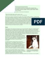 El lenguaje de los gatos.pdf