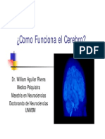Cómo Funciona El Cerebro - Aguilar Rivera, William
