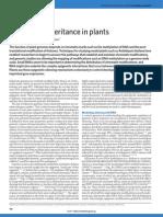Epigenetic inheritance in plants