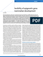 Stability and flexibility of epigenetic gene regulation in mammalian development