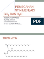 Reaksi Pemecahan Tripalmitin Menjadi Co2 Dan h2o