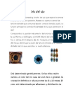 Retina del ojo.docx