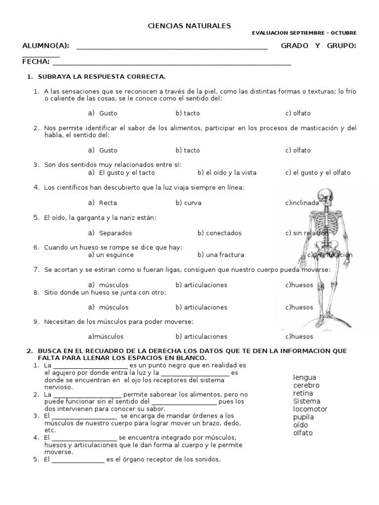 Examen Ciencias Naturales Primer Bimestre Cuarto Grado Gusto Musculo