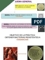 Purificacion de Plamidos 2