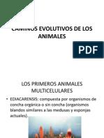 Caminos Evolutivos de Los Animales