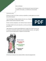 Cambios fisiológicos durante el embarazo.docx