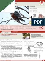 015 Martin Pescador Grande