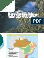 Seminario - Mata Das Araucarias