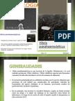 Toxicología Vibrio Parahaemolyticus