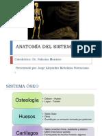 Anatomia Osea
