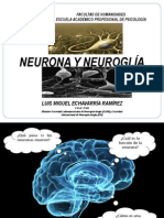 SESION 3. Neurona y Glia