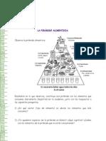 5°_Guía de trabajo_Pirámide alimentaria