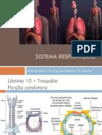 pratica_moduloRespMedicina2014
