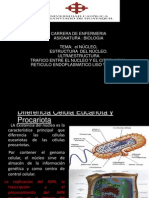 BIOLOGIA - nucleo