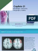 Raff Fisiologia Figuras c21 Aprendizaje Memoria