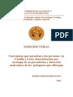 Tesis Pedro Fern%C3%A1ndez Soto