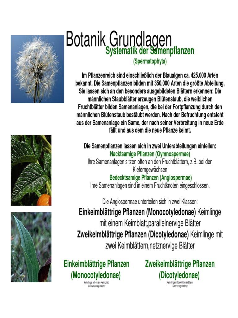 1538255853v1 - Einkeimblattrige Pflanzen Beispiele
