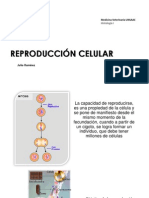 c. Reproduccion Celular