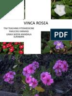 VINCA ROSEA