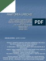 Anatomia Urechii Curs