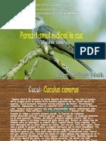 Www.referat.ro Parazitismulnidicollacuc 81339