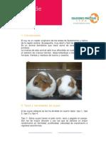 FichaTecnica19-Crianza+de+cuyes