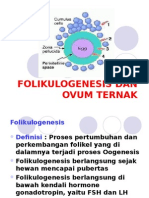 Folikulogenesis