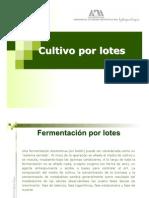 Cultivo_lote
