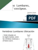 Vertebras Lumbares, Sacras Y Coccígeas