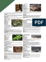 Especies de Serpientes