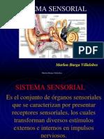 06. Sistemas Sensorial