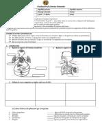 Evaluación de Ciencias Naturales 5° sistema respiratorio y circulatorio