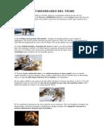 10 Curiosidades Del Tigre