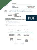 Morfo 2, Pared Anterolateral y Posterior Abdomen
