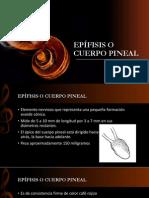 Epífisis o Cuerpo Pineal