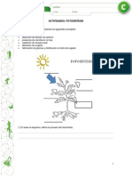 Actividades Fotosintesis