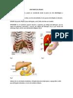 Anatomía Del Hígad1