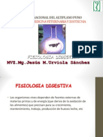 DIGESTIVO-01