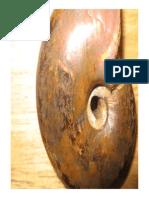 09. Fosilización -Modo de Compatibilidad