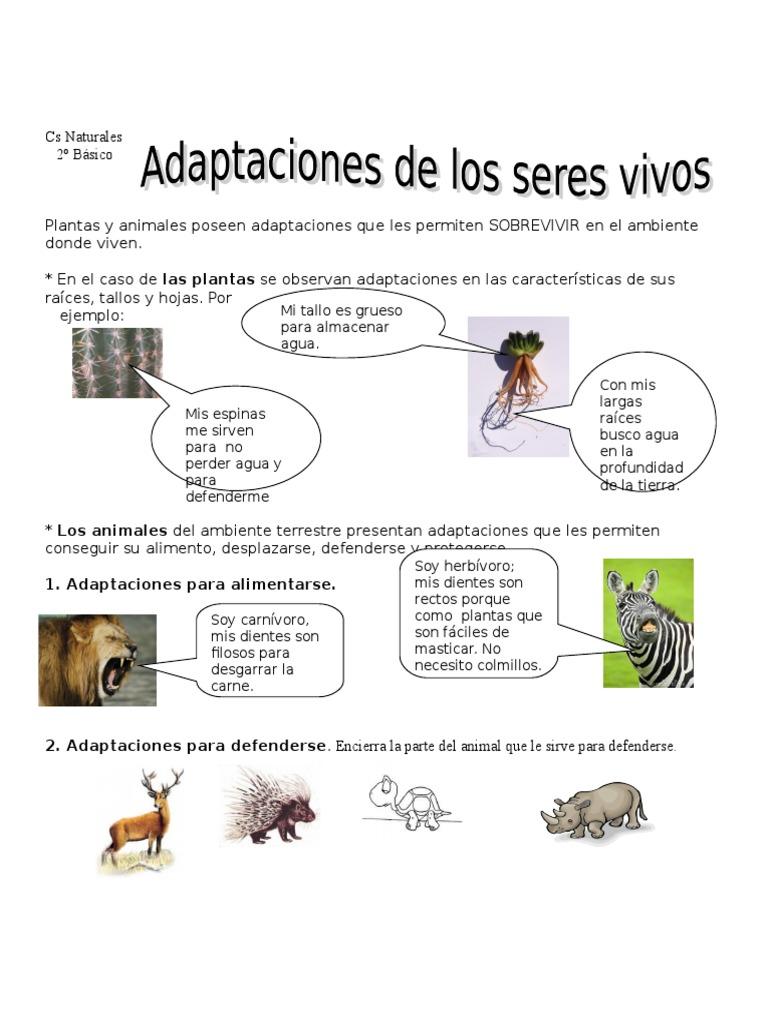 1 Adaptaciones Para Alimentarse