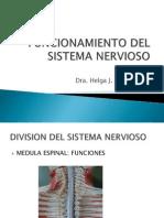 Neup-h01_funcionamiento Del Sistema Nervioso 1