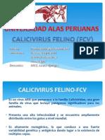Calicivirus Fisio