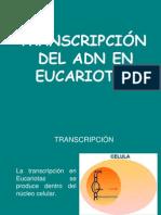 TRANSCRIPCI_NENEUCARIOTAS[1]