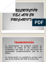Transcripción en Procariotas Modificado